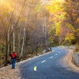Autumn Pathway royaltyfria bilder