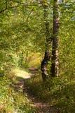 Autumn Pathway lizenzfreie stockfotografie