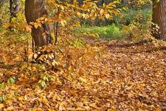 Autumn Pathway Lizenzfreies Stockbild