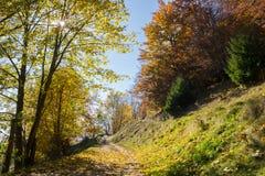 Autumn Pathway Royalty-vrije Stock Foto