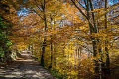 Autumn Pathway royaltyfri foto