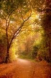 Autumn Pathway Stock Image
