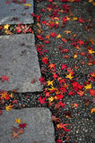 Autumn Pathway. Fallen maple leaves on stone pathway Royalty Free Stock Image