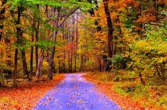 Autumn Pathway arkivbilder