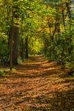 Autumn Pathway in anticipo Fotografia Stock Libera da Diritti