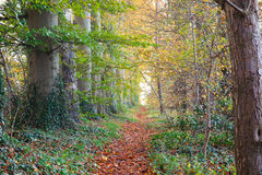 Autumn Pathway stock photos