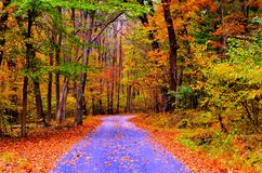 Autumn pathway Stock Images