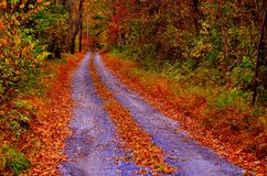 Autumn pathway Royalty Free Stock Image