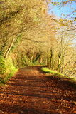 Autumn Pathway. Co.Cork Irland. royaltyfri fotografi