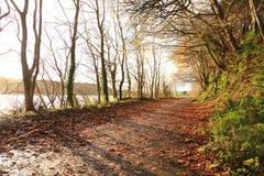 Autumn Pathway Co Cortiça, Ireland imagens de stock royalty free