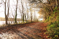 Autumn Pathway Co kork ireland royaltyfria bilder