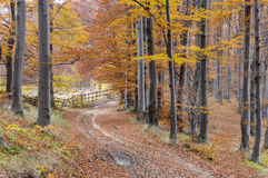 Autumn pathway through the forest Royalty Free Stock Photography