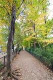 Autumn Pathway i skogen royaltyfri fotografi