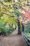 Autumn Pathway i skogen till Musashino Art University arkivbilder