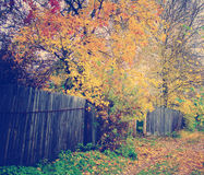 Autumn Pathway Royalty Free Stock Photos
