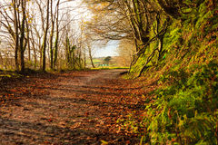 Autumn Pathway Landskap med den höstliga skogen royaltyfri foto
