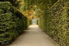 Autumn pathway in large park Royalty Free Stock Photo