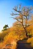 Autumn Pathway Paisagem com as árvores outonais foto de stock