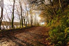 Autumn Pathway Paisagem com a floresta outonal fotografia de stock royalty free