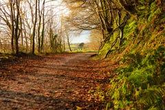 Autumn Pathway Paisagem com a floresta outonal foto de stock royalty free