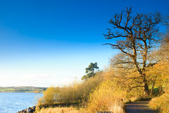 Autumn pathway at the river Co.Cork, Ireland. Stock Images