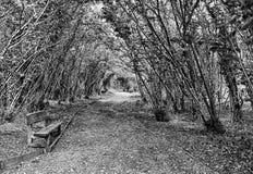 Autumn Pathway Stormont, Co Antrim Irland fotografering för bildbyråer