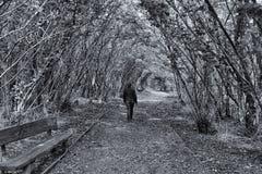 Autumn Pathway Stormont, Co Antrim Irland arkivfoton