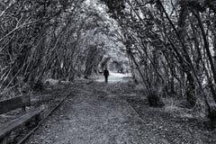 Autumn Pathway Stormont, Co Antrim Irland arkivbilder