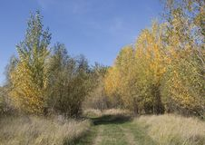 Autumn Pathway temprano Imágenes de archivo libres de regalías