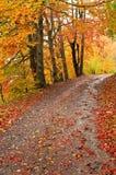Autumn pathway under the trees. Autumn scene of pathway with leaves under the trees stock image
