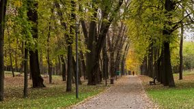 Autumn pathway in Victory park. Time lapse shot in motion