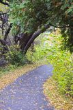 Autumn pathway into the woods. royalty free stock photo