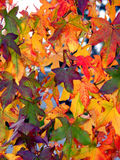 Autumn pattern. Colorful autumn leaves stock photos