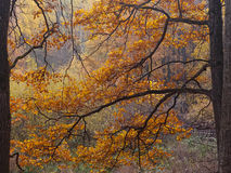 Autumn Pattern fotografia de stock