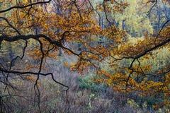 Autumn Pattern foto de stock