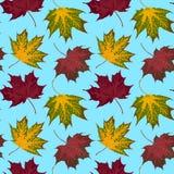 Autumn Pattern Fotos de archivo