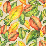 Autumn Pattern Royalty-vrije Stock Foto