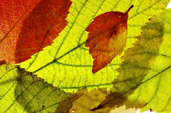 Autumn pattern Royalty Free Stock Photography