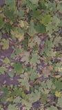 Autumn Pattern imagens de stock royalty free