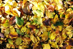 Autumn pattern Stock Photos