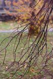Autumn pattern with branch Stock Photo