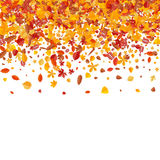Autumn pattern with bright tree leaves Royalty Free Stock Photos