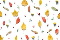 Autumn Pattern With Colorful Leaves Royalty Free Stock Image