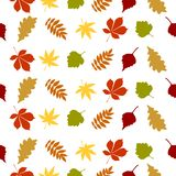 Autumn pattern of colorful leaves vector. Foliage; autumn leave; tree leave; oak leaf; maple leaf; birch leaf; Rowan leaf Royalty Free Illustration