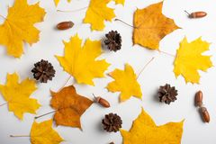 Autumn pattern with colorful (maple, birch, linden, ginkgo) leaves on white background.ability to use as background. Leaf orange design element flat stock photography