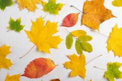 Autumn pattern with colorful (maple, birch, linden, ginkgo) leaves on white background.ability to use as background. Leaf orange design element flat stock images
