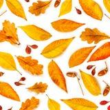 Autumn Pattern Composição da queda com as bolotas, marple dourado e folhas do carvalho isolados no fundo branco Configura??o lisa imagens de stock royalty free