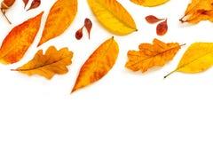 Autumn Pattern Composição da queda com as folhas douradas do marple e do carvalho isoladas no fundo branco Configura??o lisa, vis fotografia de stock
