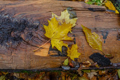 Autumn pattern from the fallen-down  leaves Stock Images