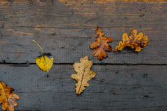 Autumn pattern from the fallen-down  leaves Royalty Free Stock Image